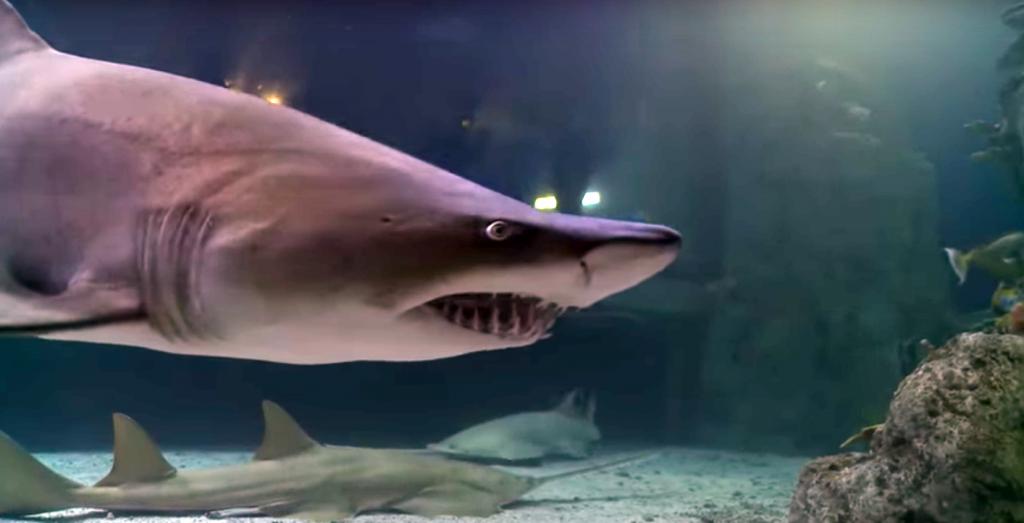 shark tank matt abraxas a rising tide